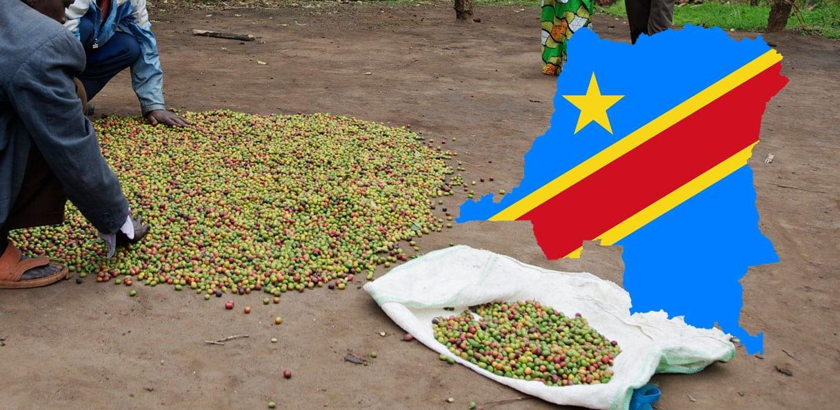 Café en République démocratique du Congo