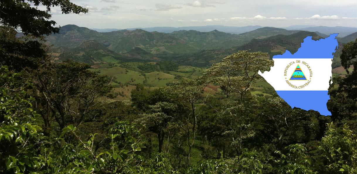 Plantation de café au Nicaragua