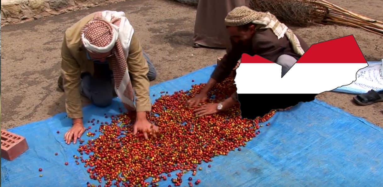 Récolte de grains de café au Yémen