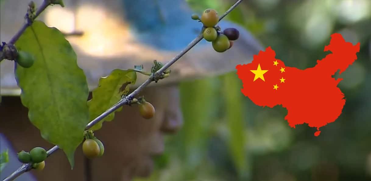 Grains de café chinois