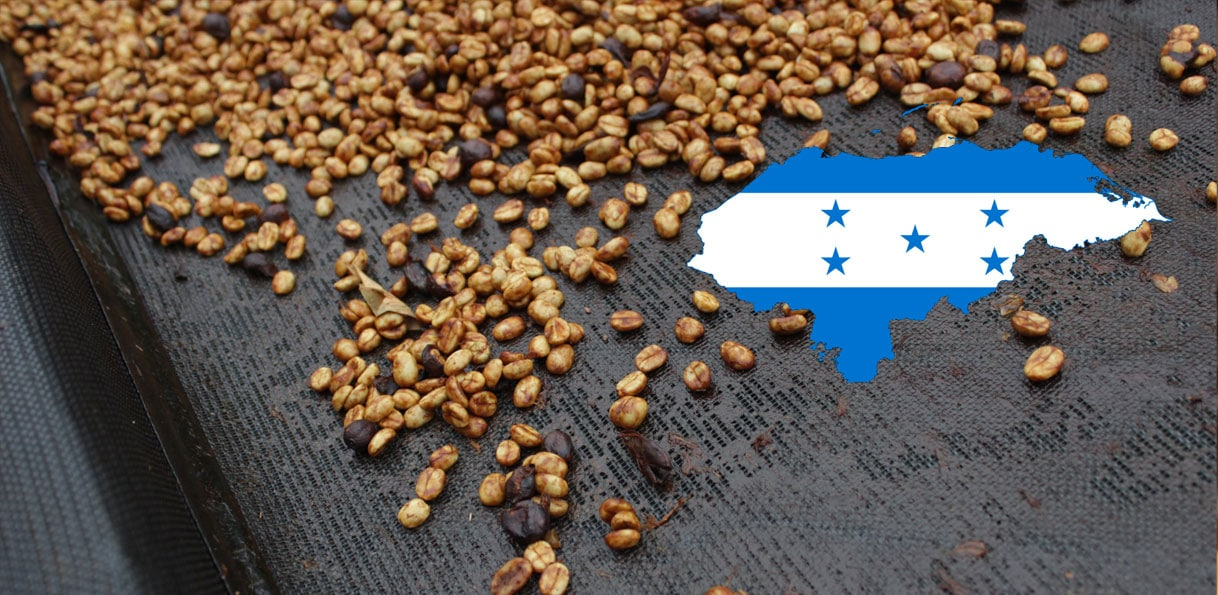 Grains de café du Honduras