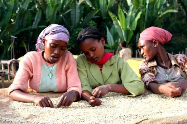 Tri du café en Ethiopie