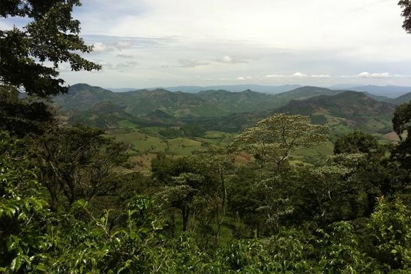 Plnatation de café au Nicaragua