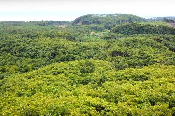 Paysage de Papouasie Nouvelle-Guinée