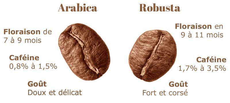 Différenes arabica robusta